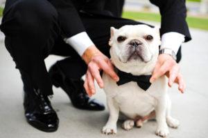 Pajarita y Smoking para perros