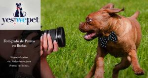 Fotografo de Perros en Bodas