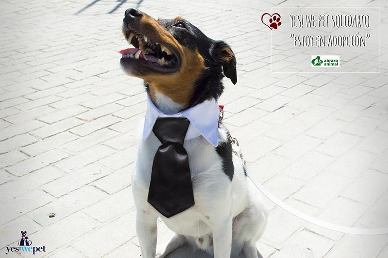 cuello con corbata para perros en boda
