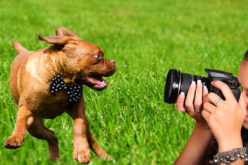 Fotógrafo de Perros para Bodas