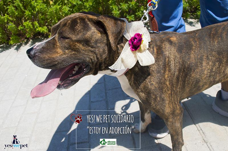 Lazo para perro en bodas