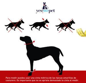 medida de cuello con corbata para perros comprar en madrid