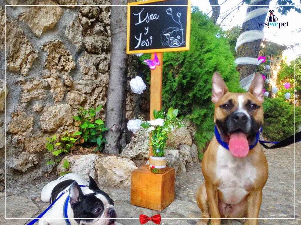 Perros en boda de Israel opinión yes we pet