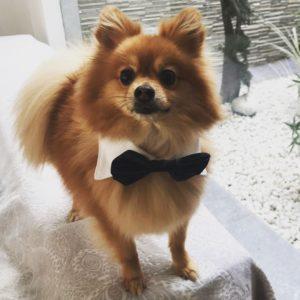 Cuello con pajarita para perros pequenos, medianos y grandes