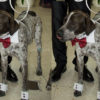 Pajaritas para perros-leganes-se-casa