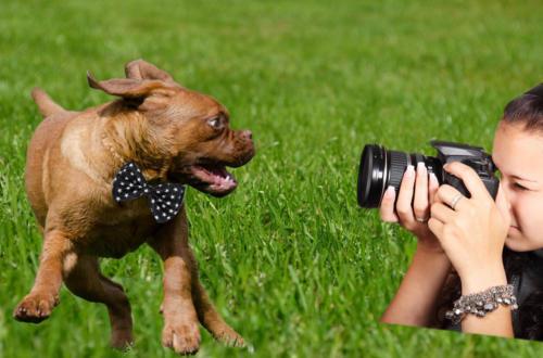 perro-foto-video-boda-1